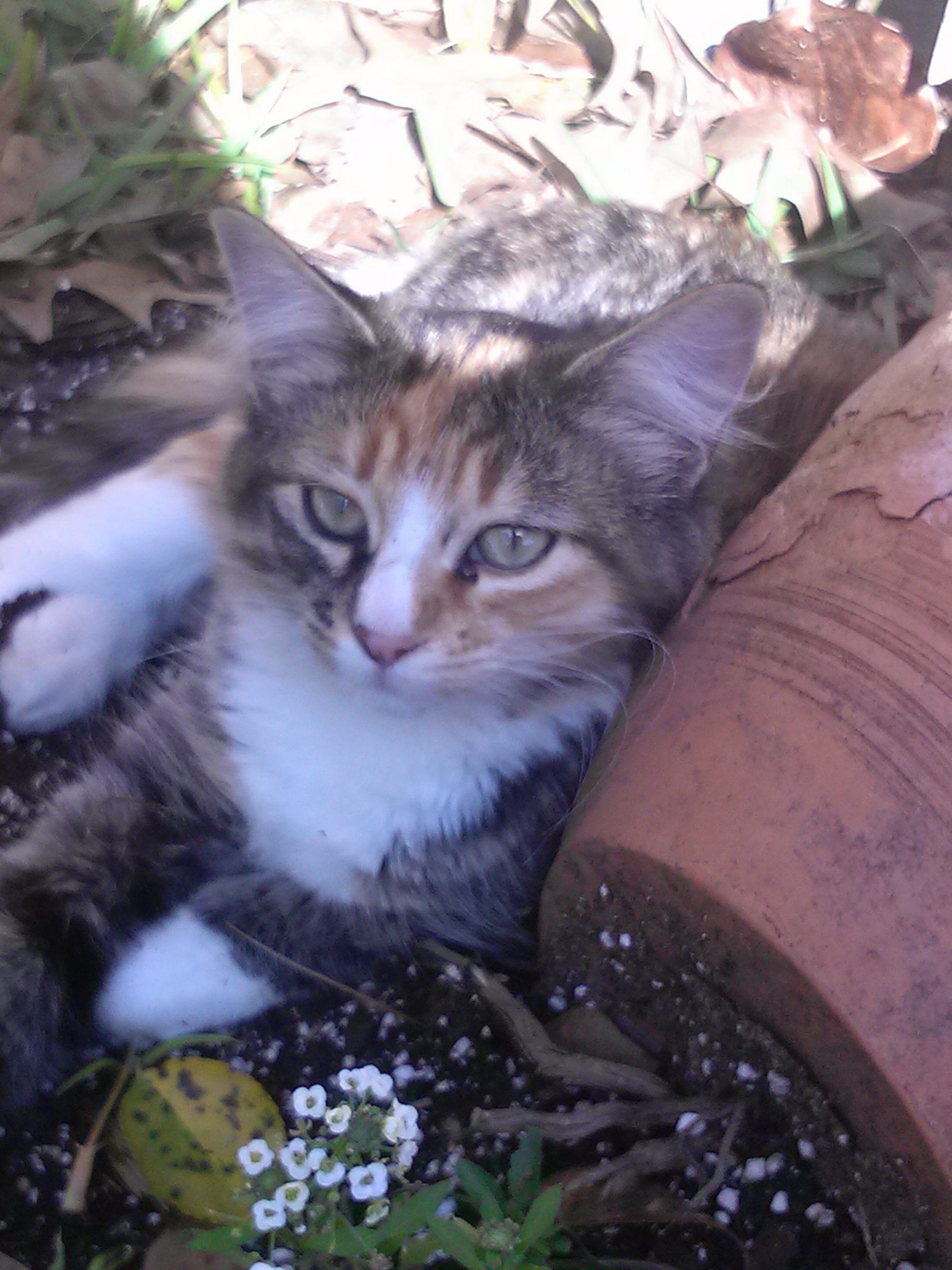 Babygirl Kitty Resting Pets Animals Kitty