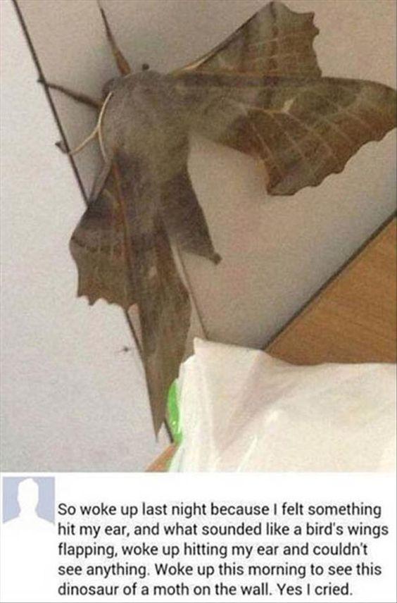 Dinosaur Of A Moth #Dinosaur, #Moth