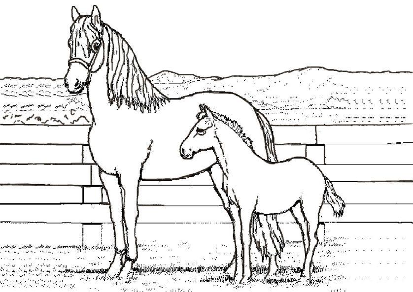 Ausmalbilder Pferde Mit Fohlen Und Reiter | T-schirt | Pinterest