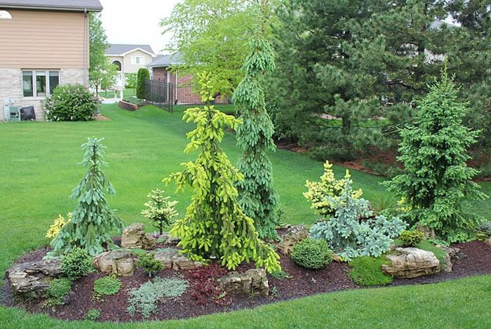 Garden Island Bed Inspiring Ideas Evergreen Landscape Front Yard Conifers Garden Garden Landscape Design