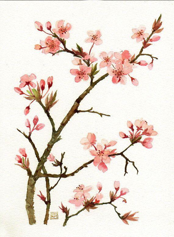 Pink blossom of prunus Original watercolor painting botanical art ...