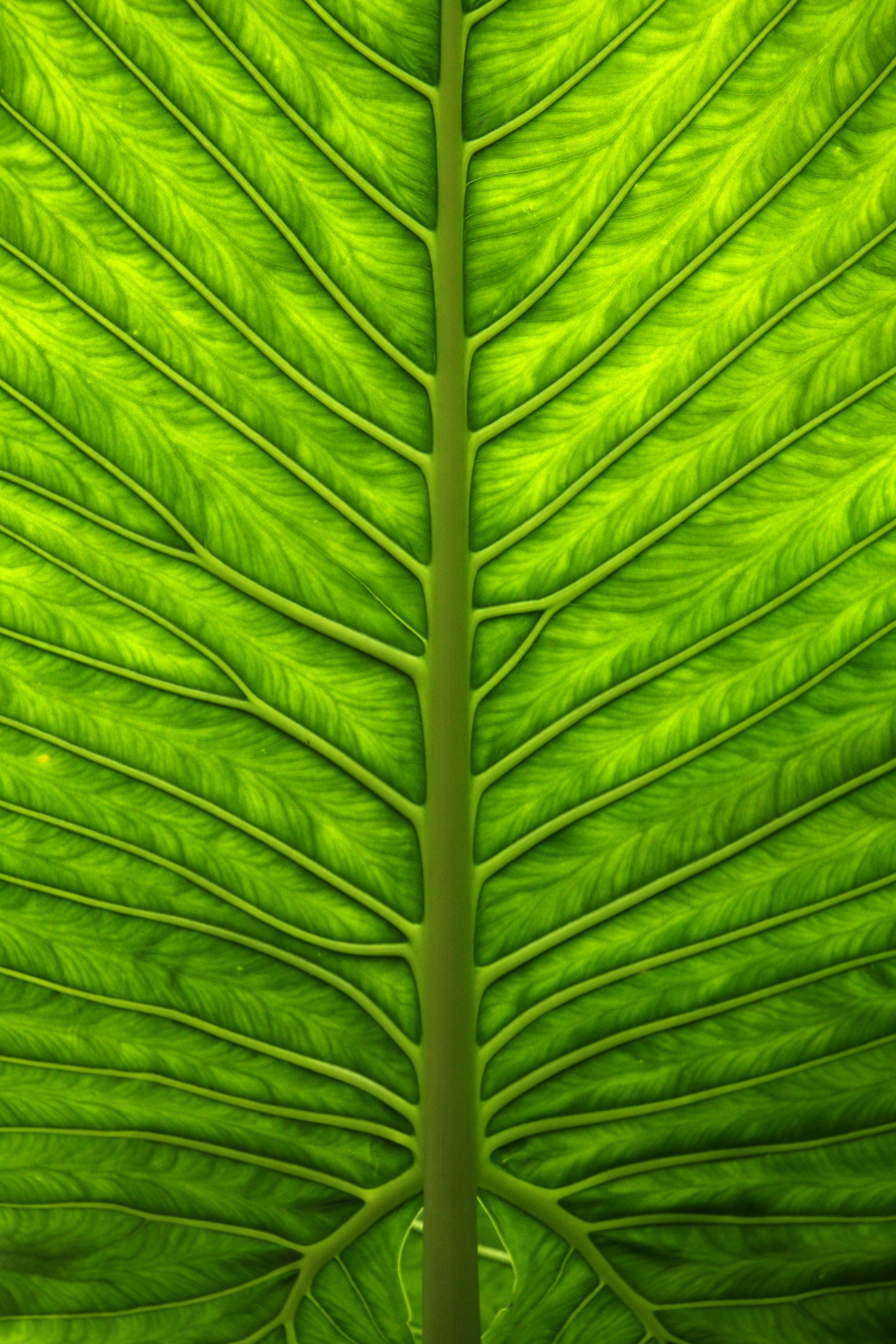 A Beautiful Close Up Of A Green Leaf  Photo One