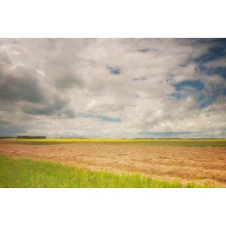 Farmland Canvas Art - Roberta Murray (20 x 28)