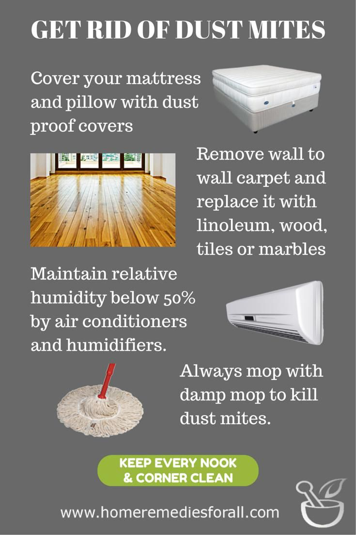 Learn How To Get Rid Of Dust Mites Dust Mites Can Cause Allergic Reactions Such As Skin Rashes Sneezing Chest Congestion Chest Congestion Remedies Dust Mites