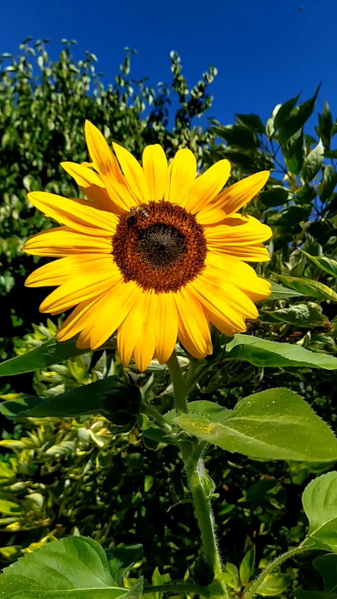 Wie Sie Ihren Garten bienenfreundlich gestalten