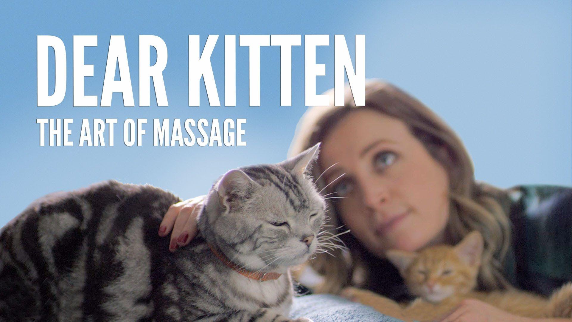 Dear Kitten The Art Of Massage Funny Cat Videos Kitten Cats