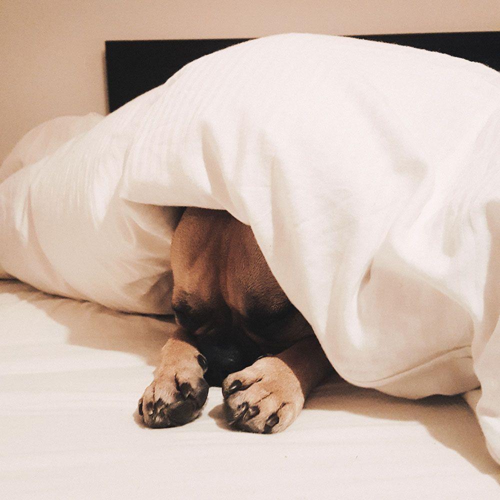 10 Grunde Sich Fur Einen Frenchie Zu Entscheiden Franzosische Bulldogge Franz Bulldogge Bulldogge