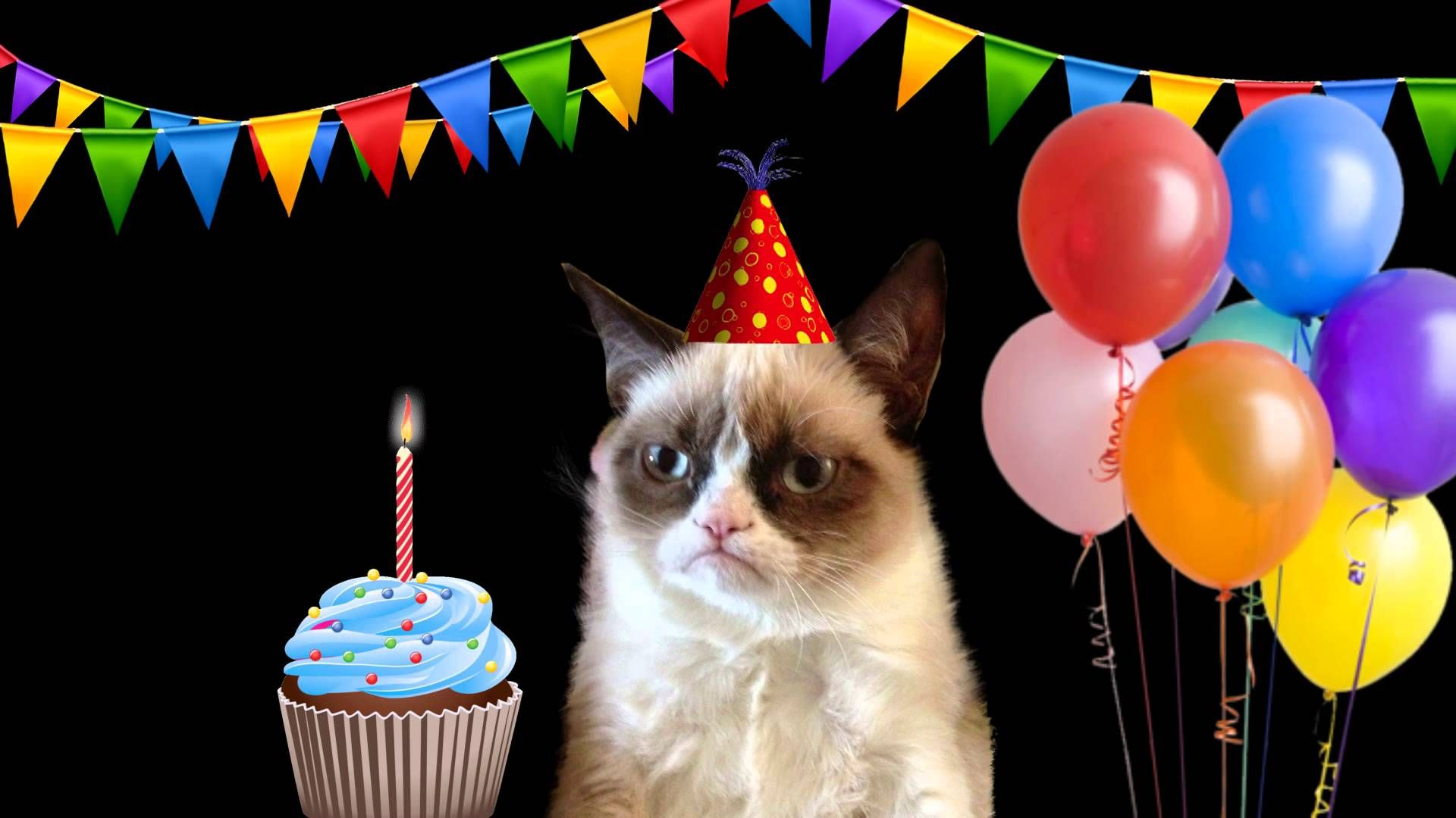 Happy Birthday Song by Grumpy Cat Grumpy cat birthday