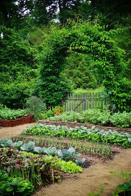 Vegetable garden (1) | Karl Gercens | Flickr – garden