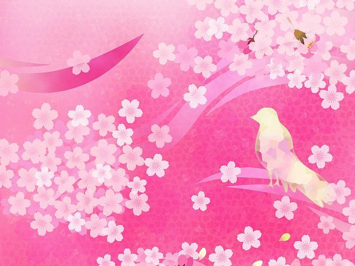 Cuckoo And Pink Cherry Blossoms Pattern Patternal Instinct