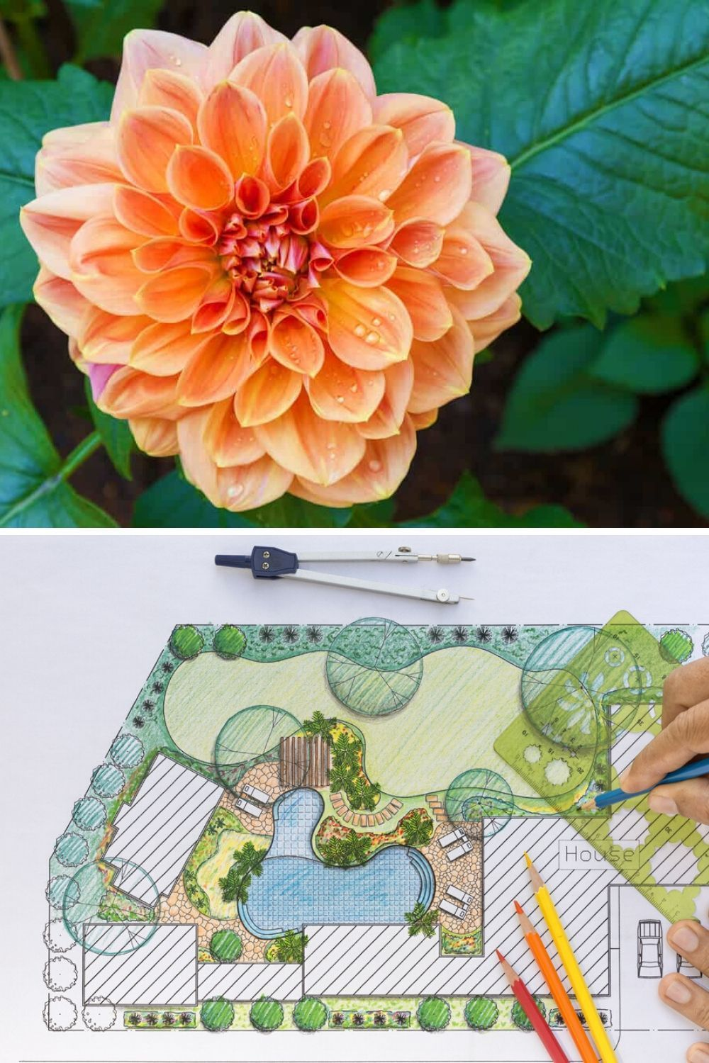 30 Different Types Of Orange Flowers A Z In 2020 Orange Flowers Types Of Oranges Dahlia Flower