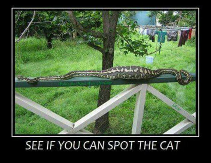 See if you can spot the cat - animal