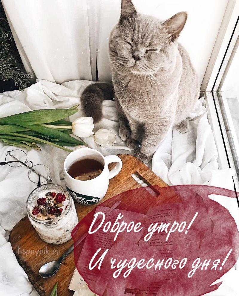 Картинки с котами доброе утро прекрасного, гиф днем