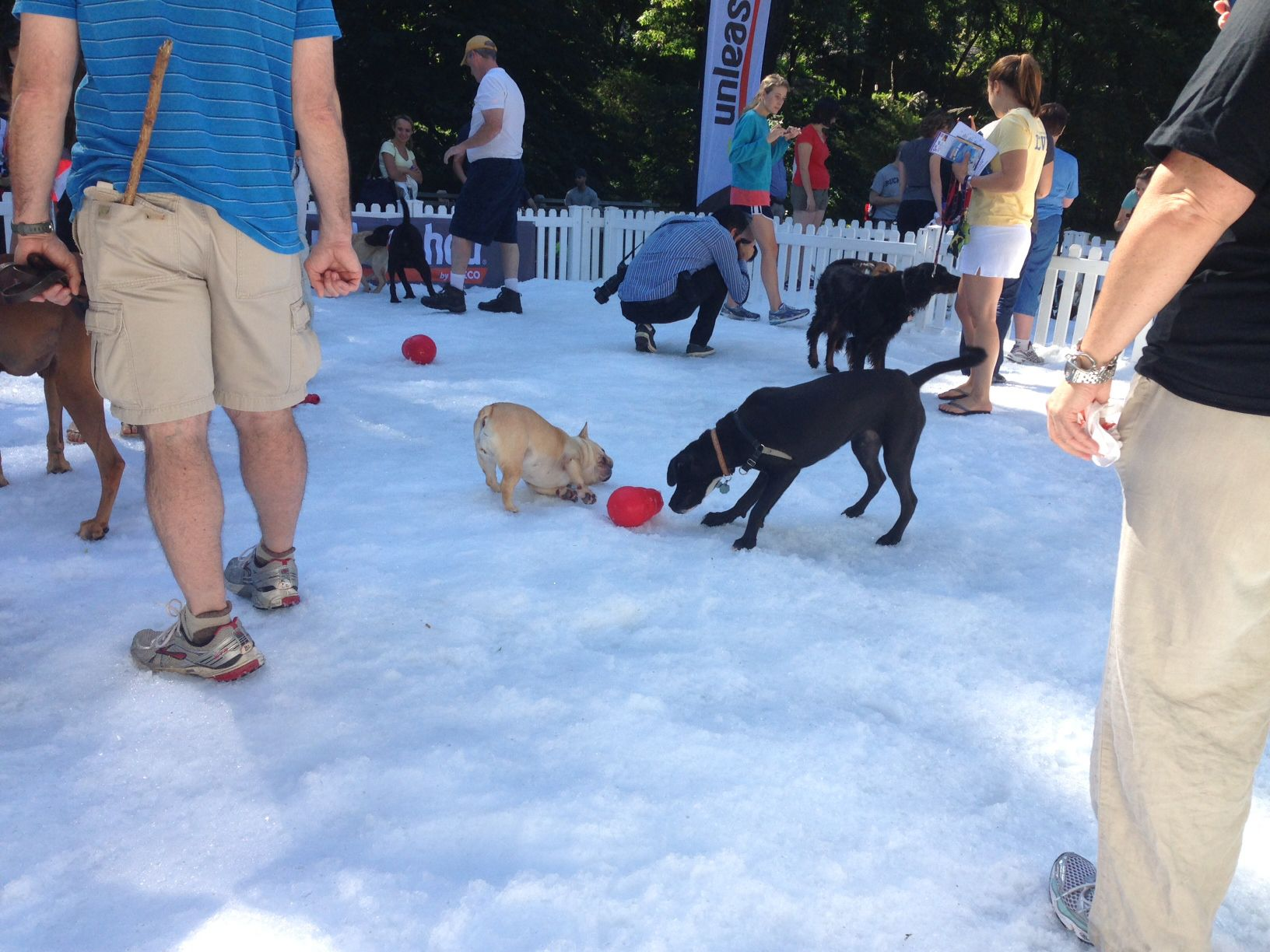Pin by KONG Company on Petco Unleashed Summer Snow Days