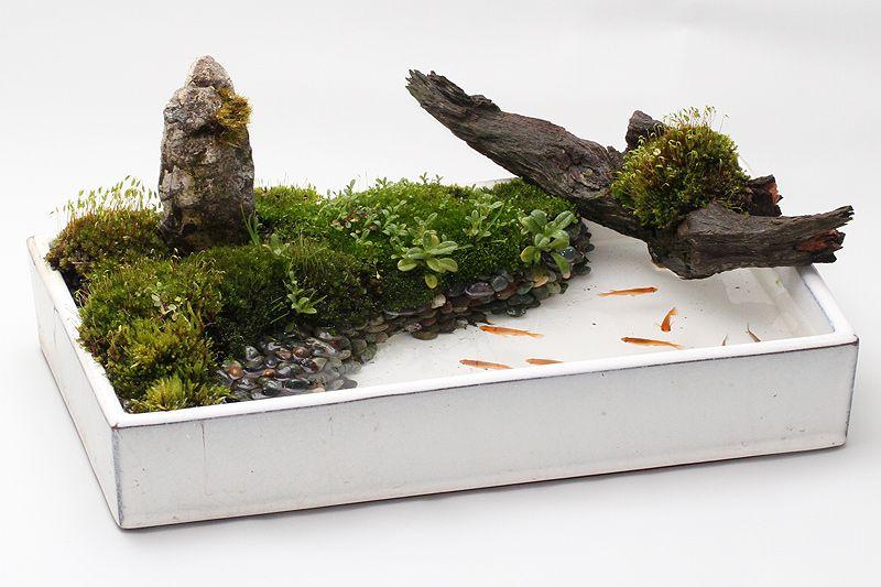 新しいメダカ飼育の楽しみ方 Bon Style 盆スタイル 小さな日本庭園 禅庭 こけ庭