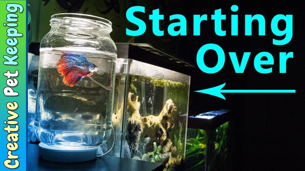 How to clean a 5 gallon BETTA FISH tank BettaFishCare