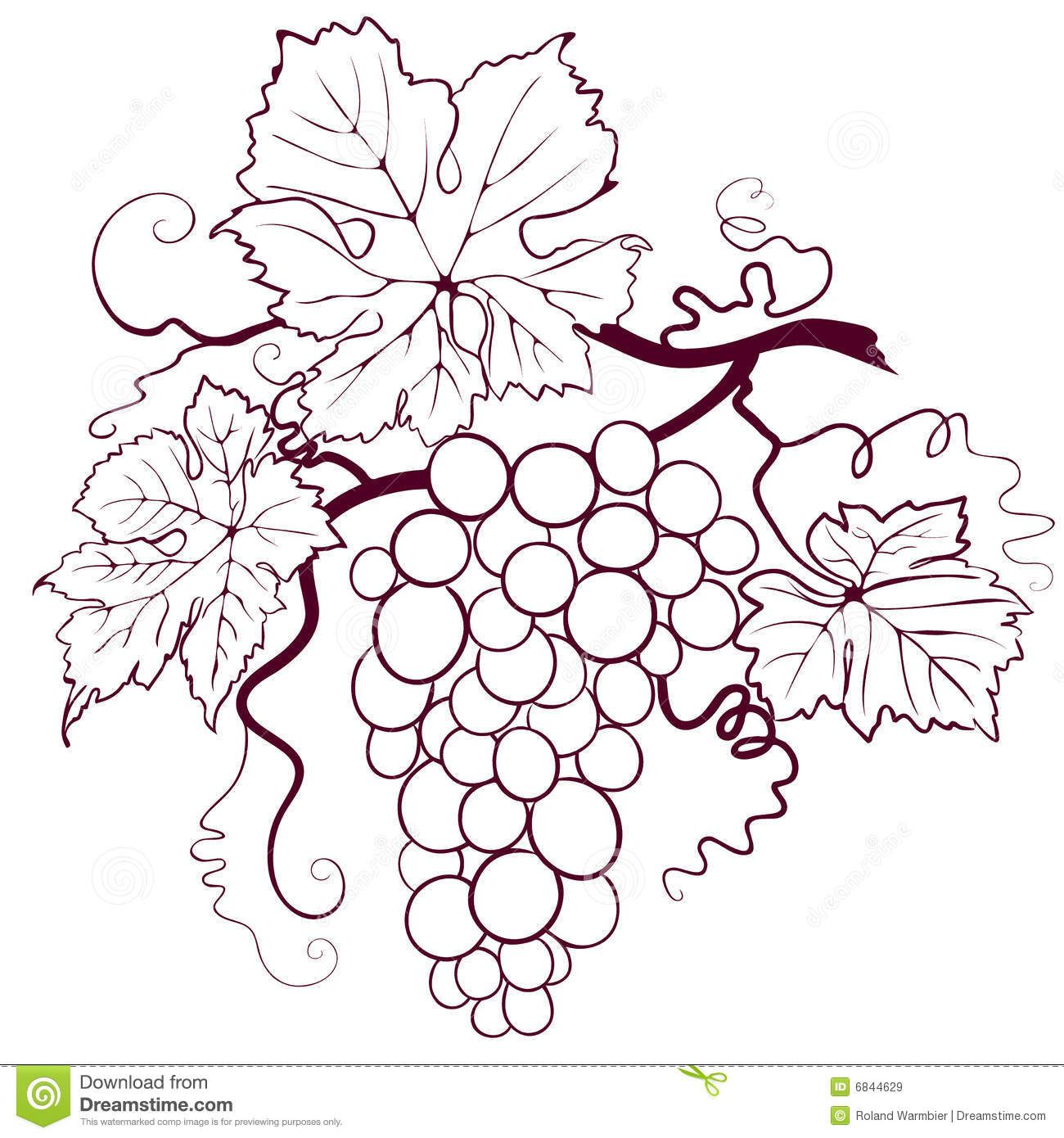 Grapes With Leaves Download From Over 46 Million High Quality Stock Photos Images Vectors Sign Up For Fre Bottle Crafts Bottle Painting Wine Bottle Crafts
