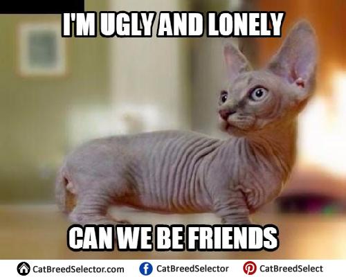 Photos Of Hairless Cat Memes Funny Cute Angry Grumpy Cats Memes