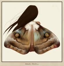 moth fantasy - Google Search