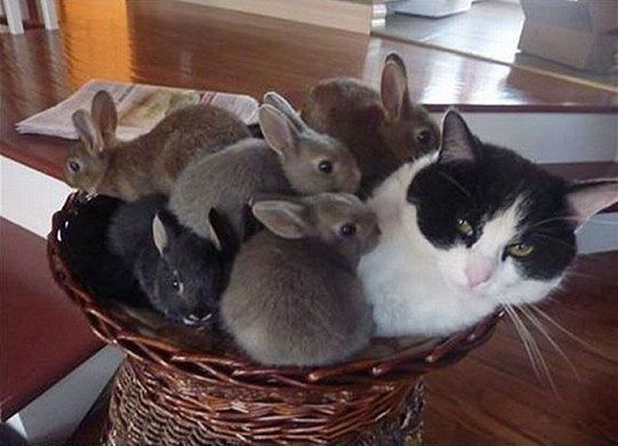 A Cat with a litter of Bunnies in a Basket - Unlikely Friendship