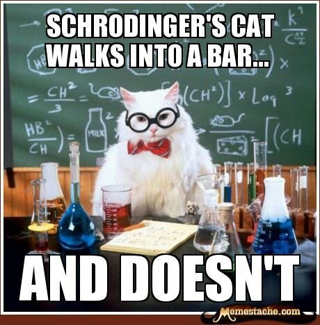 Schrodinger S Cat Walks Into A Bar Chemistry Jokes Chemistry Cat Science Puns
