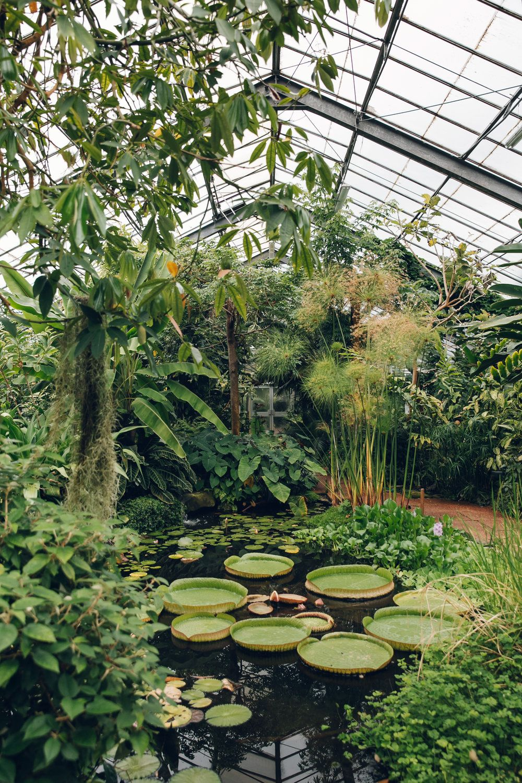 The University Of Dundee Botanic Garden Haarkon Adventures Modern Garden Landscaping Modern Garden Garden Architecture