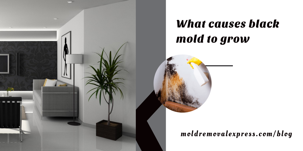 What Causes Black Mold To Grow In