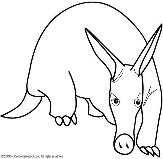 Elegant Aardvark