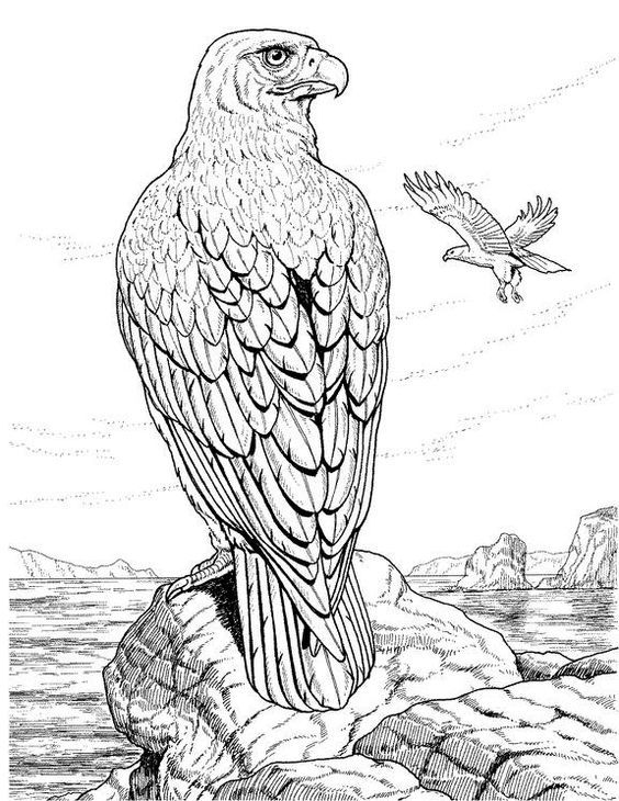 Hawks On Hawk Tattoo Falcons And Birds Of Prey Pattern Coloring PagesAnimal