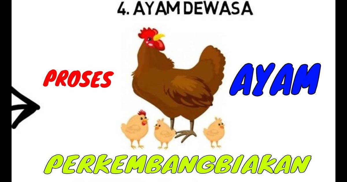 Keren 30 Gambar Kartun Perkembangbiakan Ayam Proses Perkembangbiakan Ayam Download Habel 1 Perkembangbiakan Hewan Dan Tumbuhan Kartun Gambar Kartun Gambar