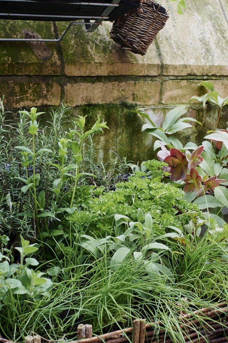 all gardenista garden design inspiration stories in one place c t potager herbes. Black Bedroom Furniture Sets. Home Design Ideas