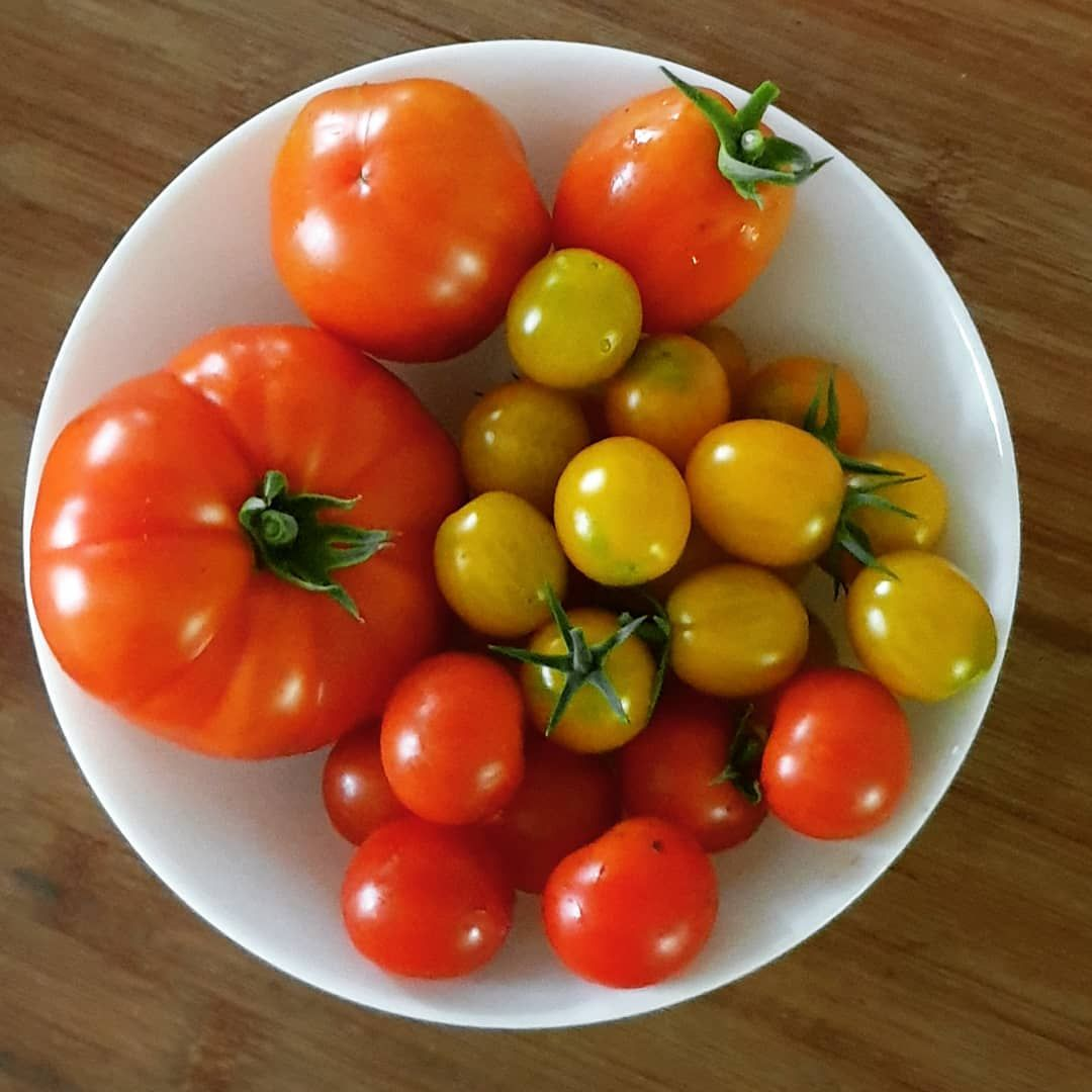Meine Heutige Ernte Ernte Garten Gartenliebe Gartenarbeit Gartengluck Tomaten Tomate Selbstversorger Selbstanbau Selbstgem Garten Gartenarbeit Tomaten