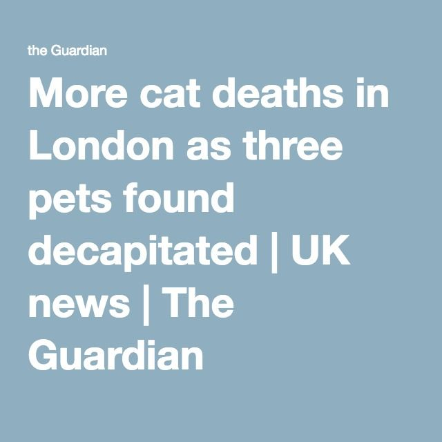 More cat deaths in London as three pets found decapitated | UK news | The Guardian
