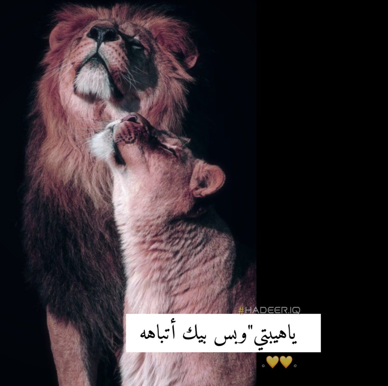 اسد لبوه Lion Cute Baby Boy Outfits Drawing Quotes Girly Images