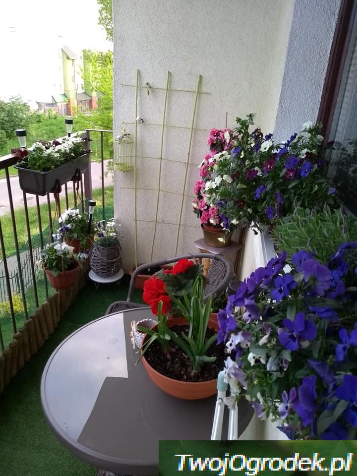 Balkon Inspiracje Plants
