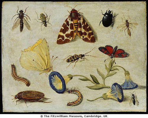 wapiti3:  Insects on Flickr. Via Flickr: KESSEL, Jan van, 1 Flemish painter (b. 1626, Antwerpen, d. 1679, Antwerpen)