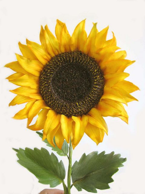 Gumpaste Sunflower Gum Paste Flowers Gum Paste Sugar Art