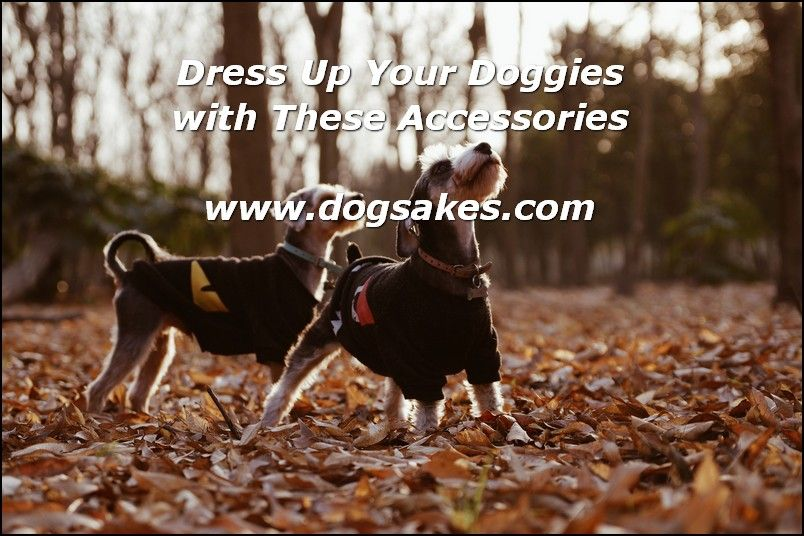 Interactive Dog Toys Dog Clothing Shopping Tips - Dog Sakes