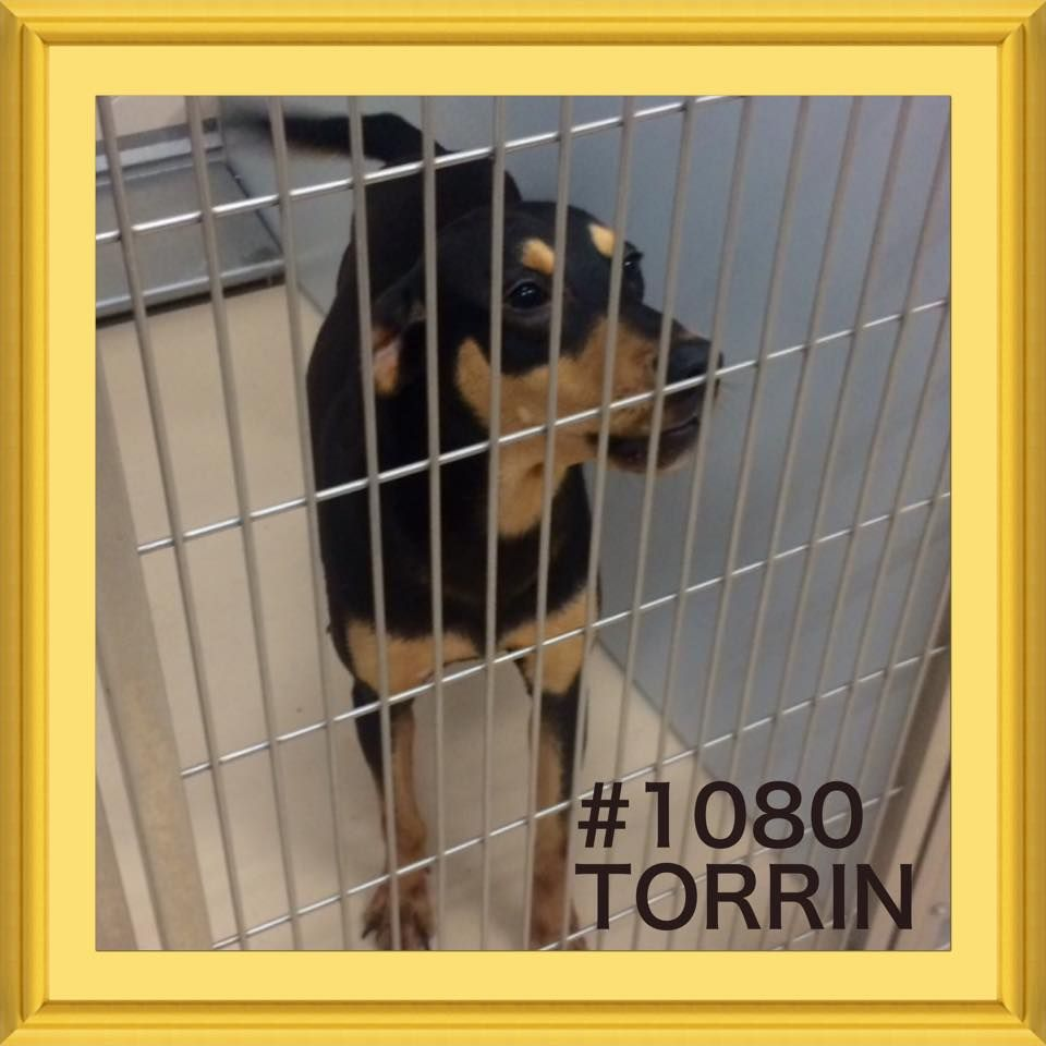 TO BE DESTROYED 05/04/17 ***REASON SPACE*** ️TORRIN ️ 2