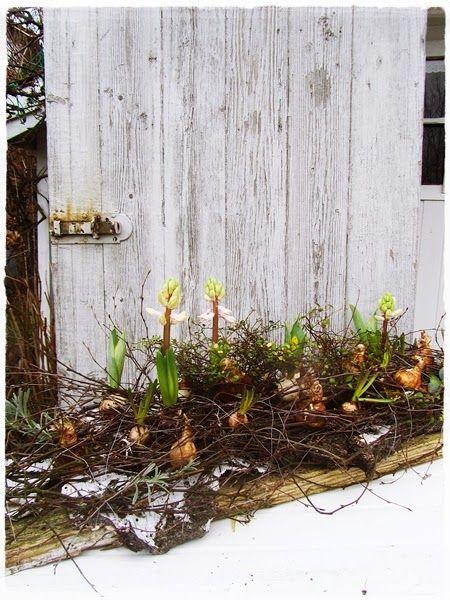 Schon Frühblüher Zwiebeln In Zweigen Im Garten Dekorieren #Frühling #Dekoration  #diy | Gartendeko/Blumendeko | Pinterest | Zweige, Landlust Und Dekorieren