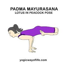 pinelif sürmeli susam on yoga  yoga asanas yoga