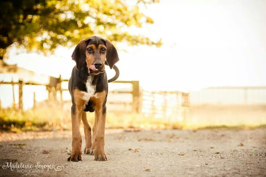 Mack The Hound Copyright C Madeleine Imogen Photography