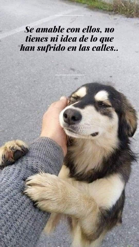 Perritos Callejeros Perros Frases Perro Callejero Historias De Perros