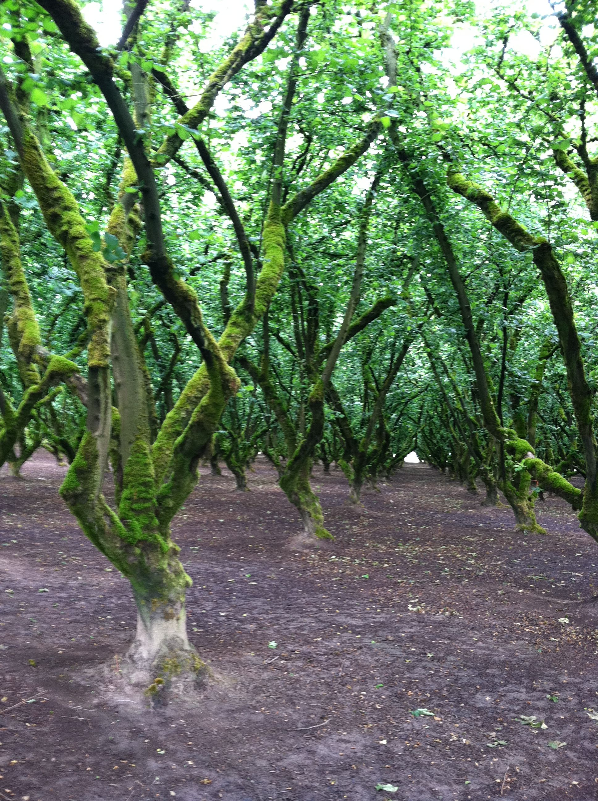 Orchard in rural Oregon