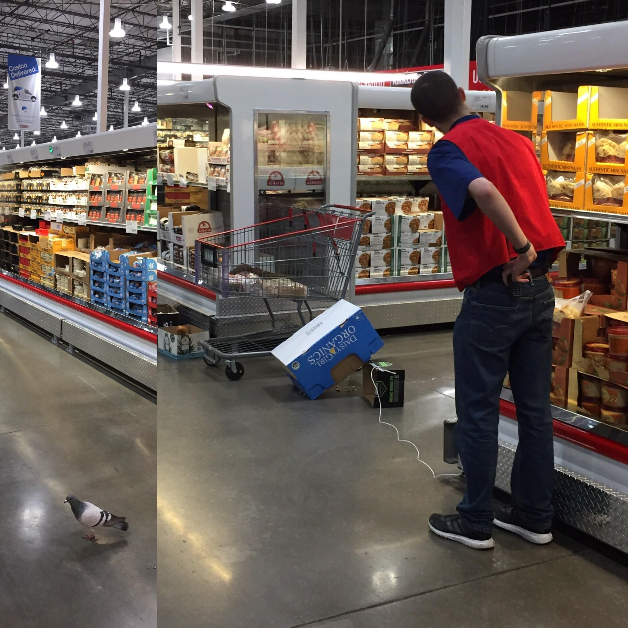 Nothing to see here just a Costco employee silently