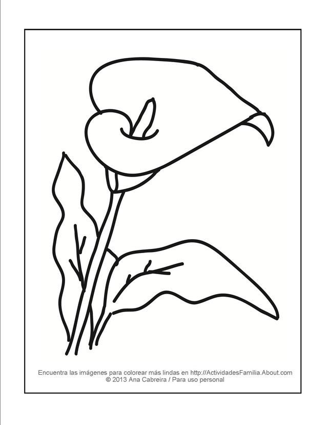 11 Lindos dibujos de flores para colorear | Dibujo de flores, Calas ...