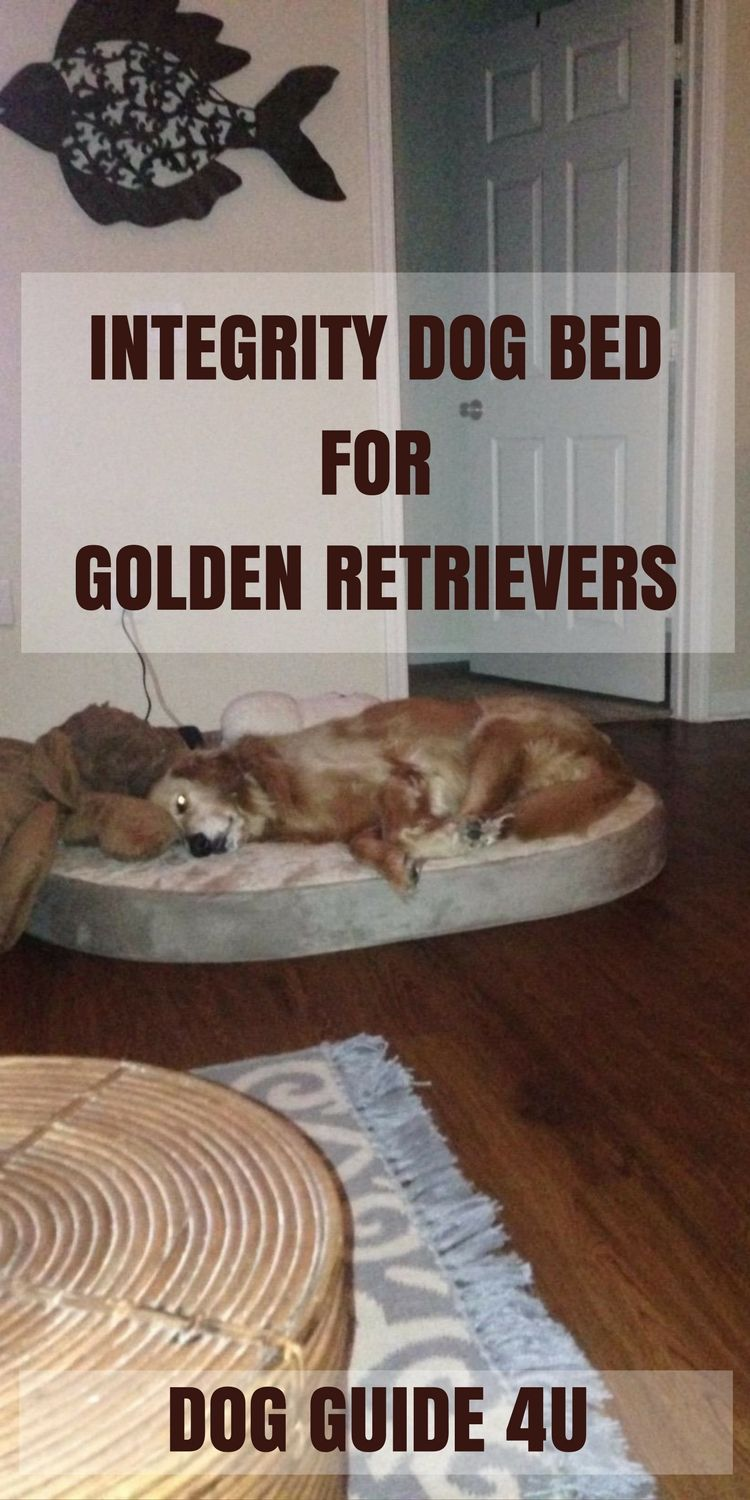 integrity dog bed for golden retrievers dogbed dogguide4u smart