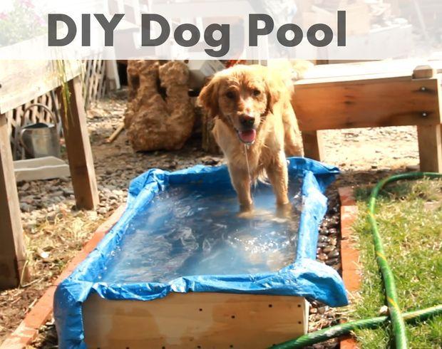 Diy Dog Pool Dog Pool Diy Dog Stuff Dog Playground