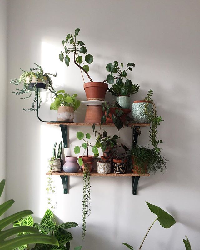 Good thing about being sick at hom | Indoor plant wall ...