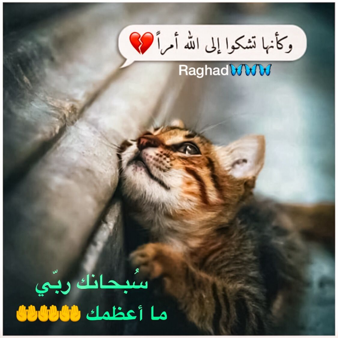 Desertrose سبحانك ربي ما أعظمك Cats Crazy Cats Cats And Kittens